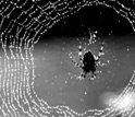Image of a spider on its web of silk.