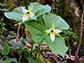 Urbanization delays spring plant growth in warm regions