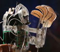 Photo of the robot stickybot.