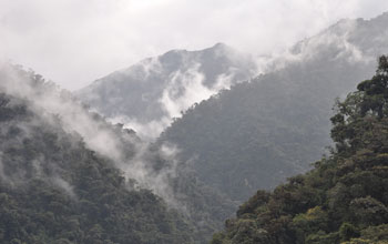 Photo of fog over the cloud forest in Ecuador's Oyacachi watershed.