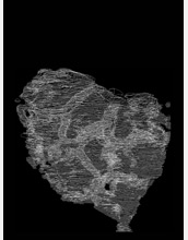 Image composed of stacked autotraced rock sections showing the ellipical fossil.