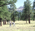 Photo of the ponderosa pine meadow study site with two researchers taking samples.