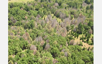 EID scientists will study sudden oak death in California.