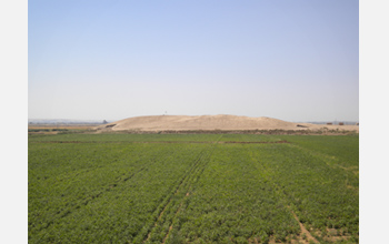 Photo of the Tell Zeidan site in irrigated fields.