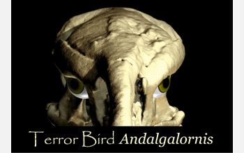 Front view of the skull of the  terror bird, a six-million-year old, 4.5-feet-tall predatory bird.