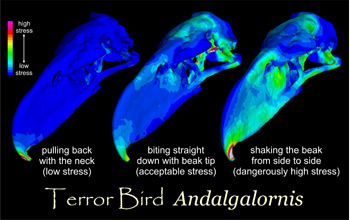 Images showing simulation of feeding behavior with lower stresses in blue, higher in red.