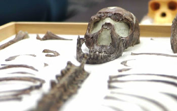 ancestor human bones on display