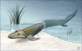 "artist's rendering of Tiktaalik, the ancient ""walking"" fish"