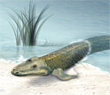 Artist's conception of Tiktaalik