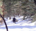 On Rabbit Mountain, N.M., scientists ski through the healthy forest