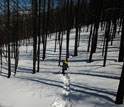 Scientist skis through the burned forest