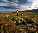 scientists conducting surveys in South Africa to track biodiversity changes.