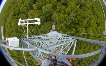 Image of forest canopy as seen from a Michigan eddy-covariance tower
