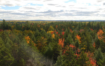 Trees as seen from the top of an eddy-covariance tower in Maine.