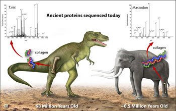Illustration and text: T. rex and mastadon showing ancient proteins sequenced today.