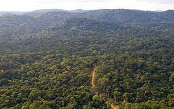 Nouabale-Ndoki National Park in Central Africa, site of the scientists' research.