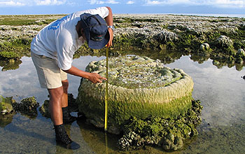 The flat top of the coral marks lowest tide levels before the giant earthquake.