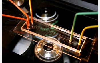 Photo of a microfluidic device used to discover new information about marine bacteria.