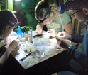 Photo of grad students sorting mosquito samples.
