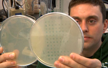 A Michigan State University researcher holding two petri dishes with viruses.
