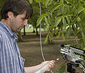 NCAR researcher Alex Guenther studies a chemical form of aspirin produced by walnut trees.