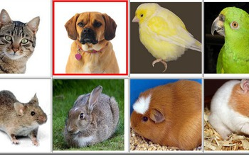 images of animals and birds