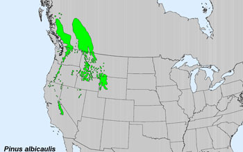 Map of US with current range of the whitebark pine tree marked
