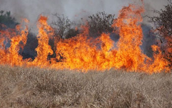 Image of a wildlifire fueled by cheatgrass