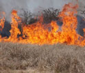 a wildlifire fueled by cheatgrass