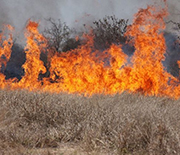 Rains fuel the growth of grasses and other vegetation, increasing fire risk once the land dries out.