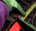 Close up of willow branch and measuring tape