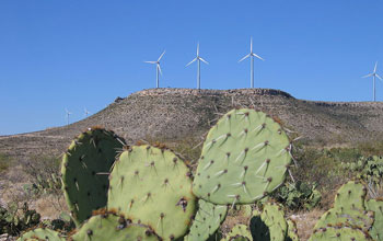 Photo of a wind farm in the background and cacti in the foreground.
