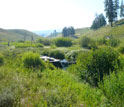Summertime at the team's upstream research site along East Blacktail Deer Creek.