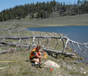 Photo of researcher Jared Singer placing flags to mark bone locations of a carcass in Yellowstone.