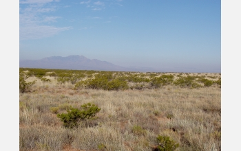 Creosote invasion into grassland at NSF's Sevilleta, N.M., Long-Term Ecological Research Site.