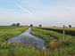 agricultural ditch with a field of corn on one side and soybeans on the other