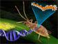 an aphid and fungus are linked by a DNA strand