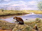 artist's rendering of the Beaver Pond