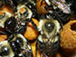worker bumblebees, tagged with tiny RFID chips