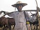 pastoralists in Cameroon