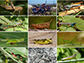 diversity of the grasshopper family Acrididae