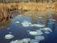methane bubbles are trapped in the ice on a pond