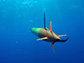 long-range AUV cruises beneath the surface