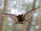 a flying bat in Forest