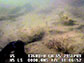 underwater video footage of a sediment-covered, low-relief oyster reef