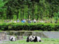 photo of tourists watching pandas