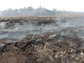 a smoldering peatland fire in a drained lakebed