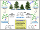 biorenewable and robust terpenoid scaffolds from pine