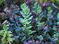 Machine learning unlocks plants secrets