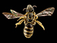 image of a sweat bee